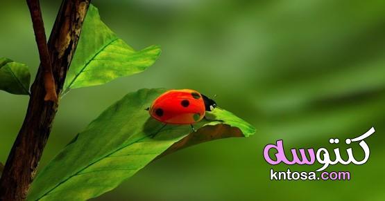 ماذا لو انقرضت الحشرات،ماذا سيحدث لو اختفت الحشرات من كوكب الأرض