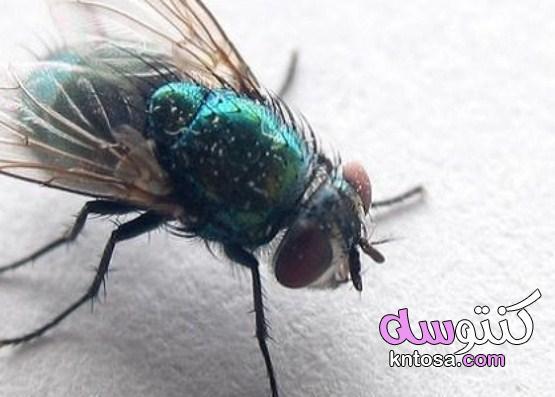 التخلص من الحشرات المنزلية لبيت صحي وآمن kntosa.com_20_21_161