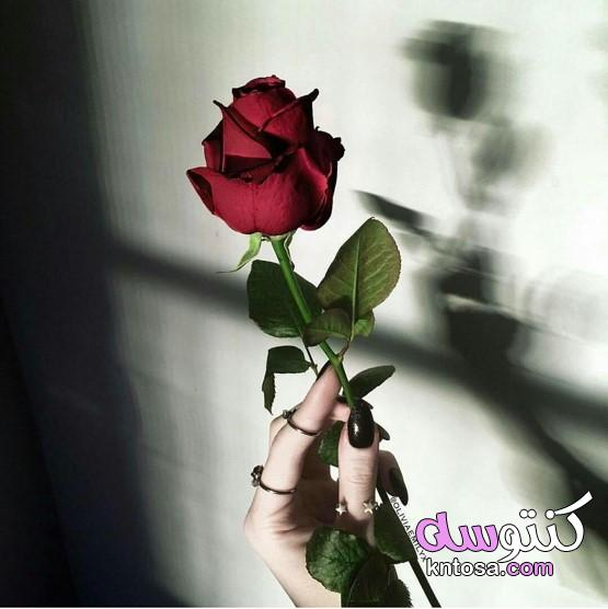 ورود رومانسية للاهداء،صور ايد بنت2020, رمزيات فتاه ماسكه ورده،ورد طبيعي بالصور kntosa.com_21_20_159
