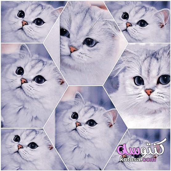 فن المتجهات الحرة على وجه القط
