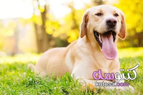 كيف ترطب كلبك بشكل صحيح خلال الصيف؟ kntosa.com_21_21_162