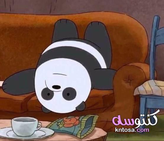 صور الدببة الثلاثة باندا,خلفيات الدببة باندا,دببة الباندا الثلاثة,الدببة الثلاثة الدب الباندا كرتون kntosa.com_22_19_156