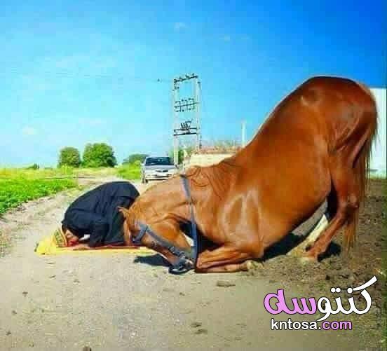 صور حيوانات تدعو الله،هل هذه الحيوانات تصلي وتسبح الخالق !؟