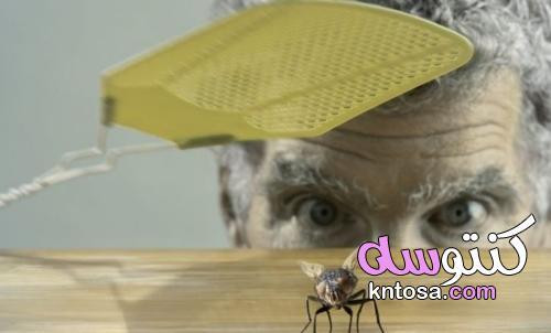 نصائح طبيعية للتخلص من الذباب في المنزل kntosa.com_22_21_162