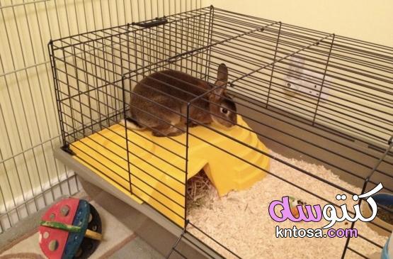 الأرانب: حيوانات أليفة رائعة