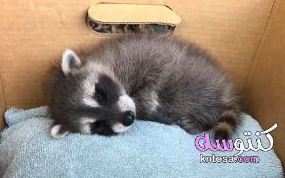 صور حيوانات مذهلة من حول العالم تصيبنا بالدهشة 2022 kntosa.com_23_21_161
