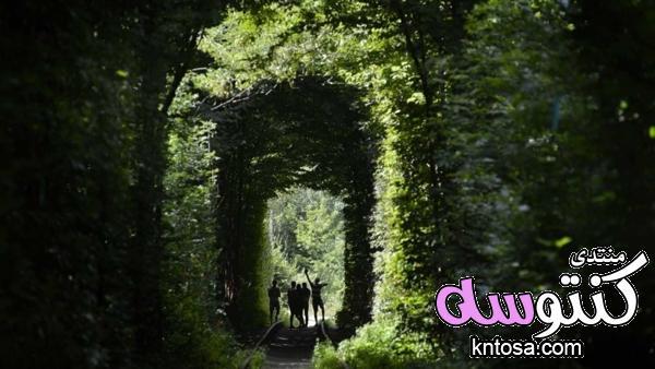 شاهدى نفق الحب,نفق الحب طريق العُشاق,نفق الحب في أوكرانيا بالصور kntosa.com_25_18_154