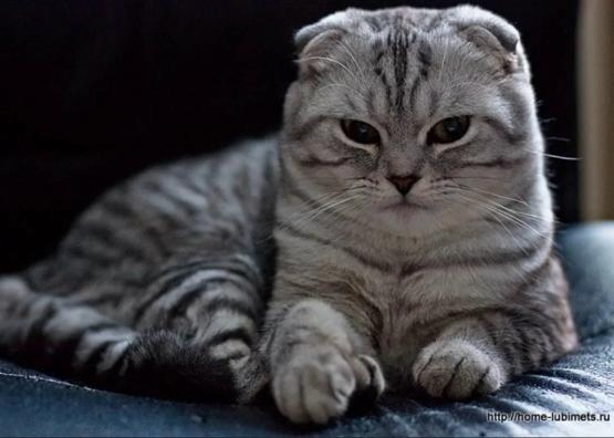 أروع صور القطط ،صور قطط روعة2020، صور قطط حلوة، صور قطط حزينه وجديدة