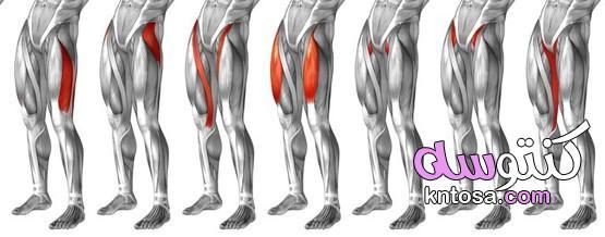 تعريف دور العضلات في احداث الحركات