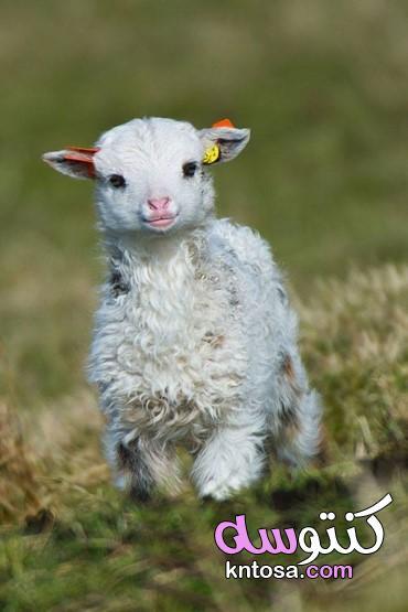 صور الحيوانات وهي بيبي،صور حيوانات كيوت،صور حيوانات للاطفال جميلة جداً kntosa.com_25_21_161