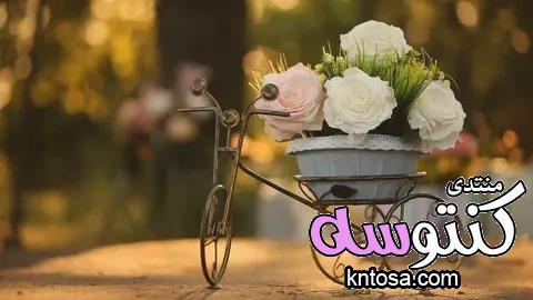 احلى صور ورود 2019 جوده عالية,صور زهور منوعة,اجمل صور ورد للعشاق,ورود رومانسية kntosa.com_26_18_154
