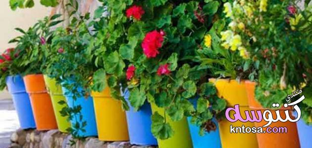 العناية بالنباتات في الشتاء,كيفية العناية بالزرع المنزلي,نصائح للعناية بالنباتات المنزلية kntosa.com_27_19_155