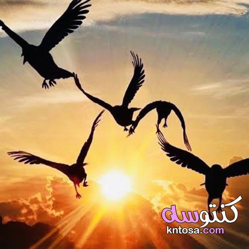 العلاقات بين الناس كالرمال بين يديك kntosa.com_27_21_162