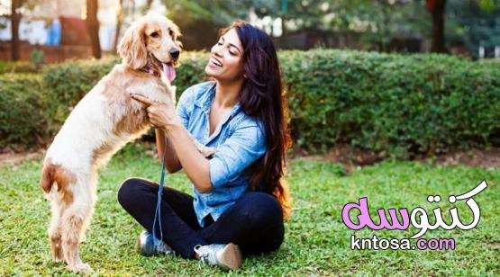 كيفية تدريب الكلب: نصائح وإرشادات kntosa.com_29_21_162
