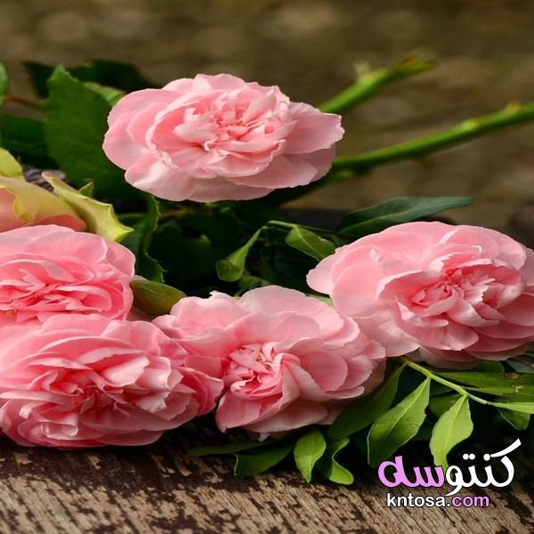 باقات ورد رائعة، ورود وأزهارمبهجة،أجمل الورود المتنوعة، ورود رائعه أجمل الورود والأزهارالمختلفة2020 kntosa.com_30_19_156