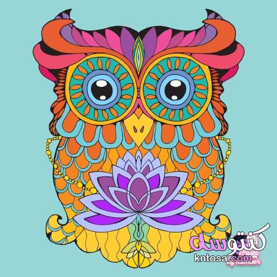 اجمل الرسومات الفنية،رسومات استنسل بسيطة، اروع الرسومات الملونه وحصرى 2021 kntosa.com_31_21_161